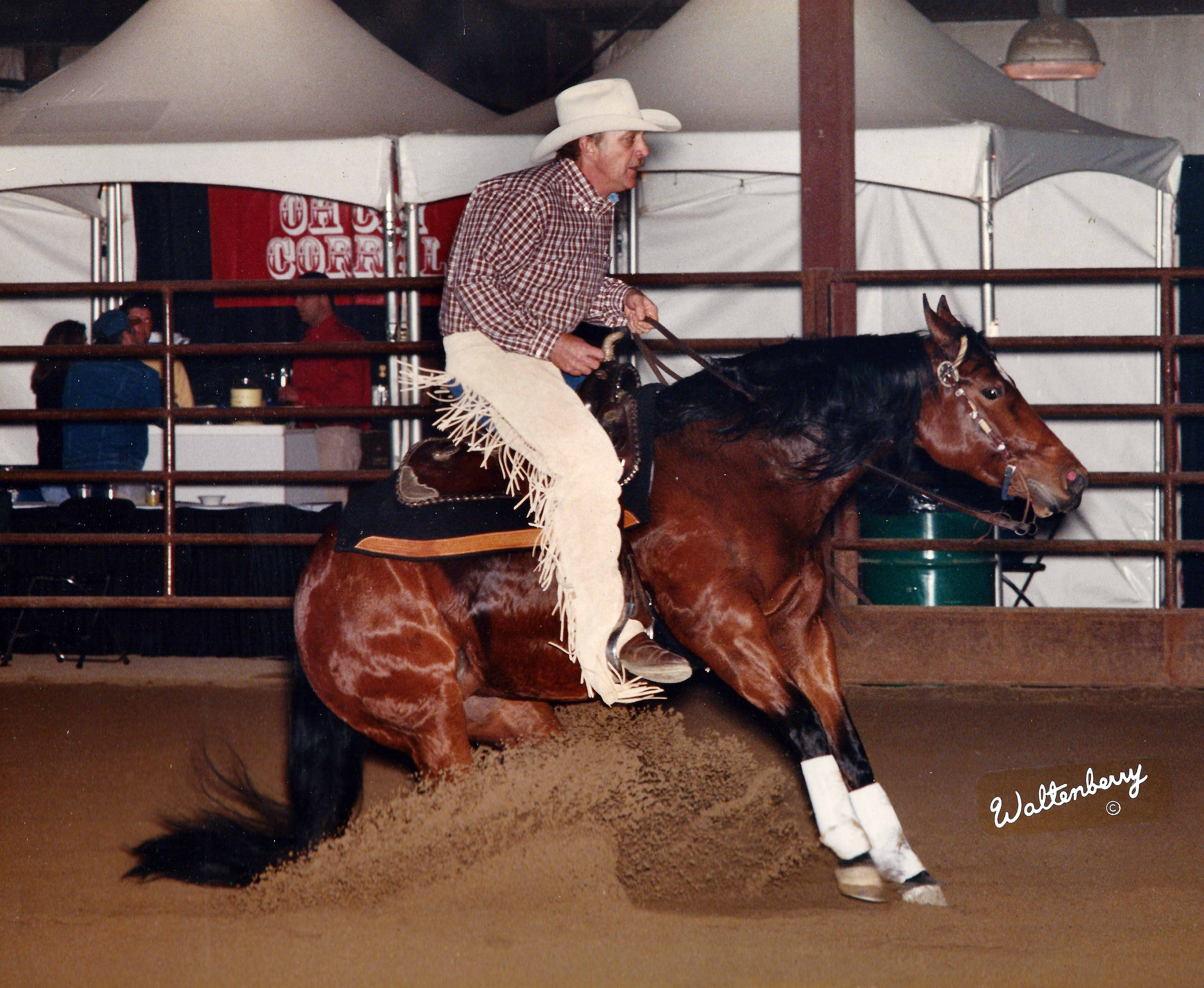 Gizit Glider - 1995 Bay Mare by Queen Savage